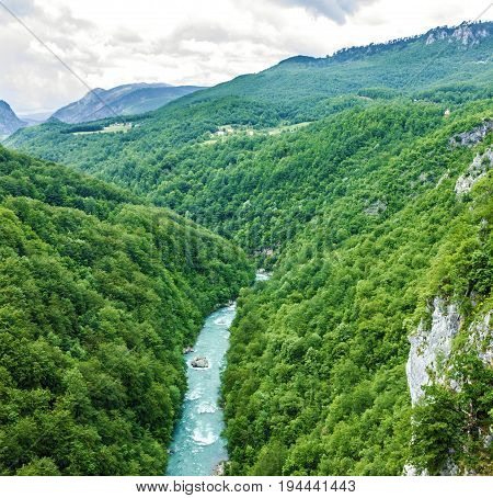 Mountain river Tara and forest in Montenegro
