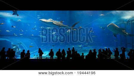 Okinawa, Japan - February 14: Sea life park with biggest aquarium window of the world on February 14, 2009