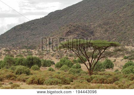 The African savannah of Kenya in Africa