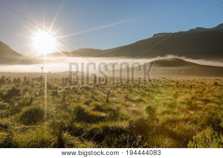 Mystic and surreal landscape with morning fog in the mountains on way to the Cradle Mountain-Lake St Clair National Park, Tasmania, Australia.