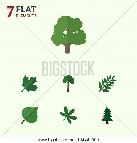 Flat Icon Natural Set Of Acacia Leaf, Hickory, Maple And Other Vector Objects. Also Includes Evergreen, Park, Foliage Elements.