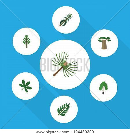 Flat Icon Natural Set Of Baobab, Rosemary, Maple And Other Vector Objects. Also Includes Baobab, Leaves, Willow Elements.