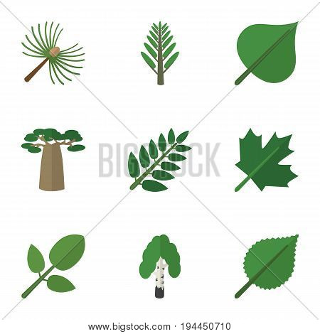 Flat Icon Natural Set Of Foliage, Oaken, Baobab And Other Vector Objects. Also Includes Alder, Forest, Rosemary Elements.