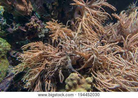 Beautiful coral reef with sea anemone and tropical fish.