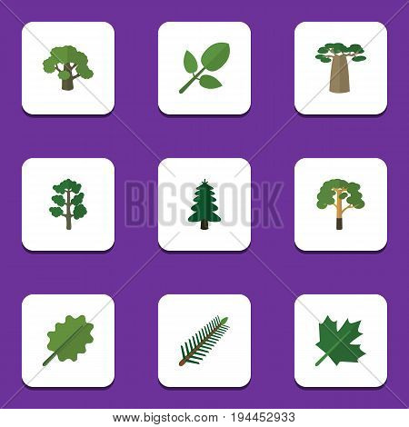 Flat Icon Bio Set Of Foliage, Wood, Oaken And Other Vector Objects. Also Includes Baobab, Spruce, Park Elements.