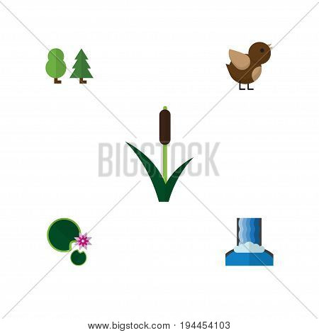 Flat Icon Ecology Set Of Cattail, Lotus, Cascade And Other Vector Objects. Also Includes Reed, Grass, Lotus Elements.