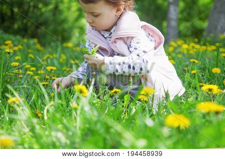 Happy childhood. The little girl collects bouquet of wildflowers.