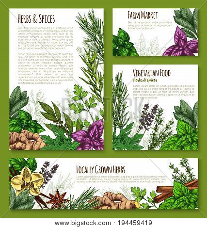 Herb, spice and leaf salad vegetable sketch banner template. Basil and mint, rosemary and thyme, cinnamon, arugula, parsley, vanilla, ginger, anise, bay, sage, lavender for natural spice shop design