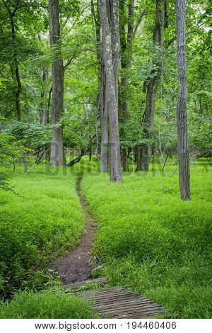 A narrow path passes through bright green grasses in Big Brook Preserve in Colts Neck New Jersey.