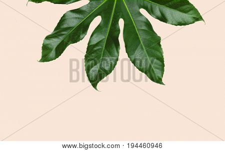 nature, organic and botany concept - green leaves over beige background