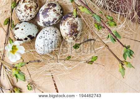 Quail Eggs And Tree Branches