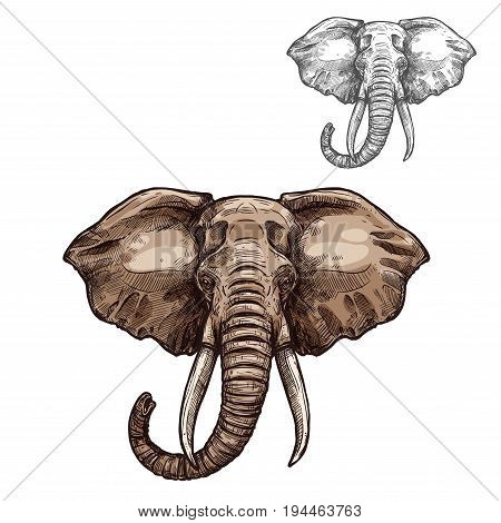 Elephant mammal animal sketch. Head of african elephant with grey skin, curved trunk and tusks isolated symbol for safari trip or zoo emblem, t-shirt print design