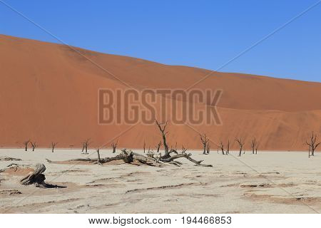 Dead Camelthorn Trees Against Red Dunes And Blue Sky In Deadvlei, Sossusvlei. Namib-naukluft Nationa