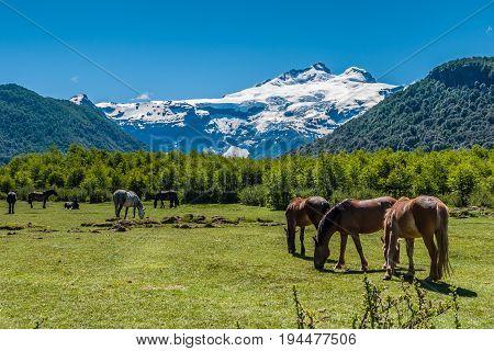 Cerro Tronador view with horses Bariloche Argentina