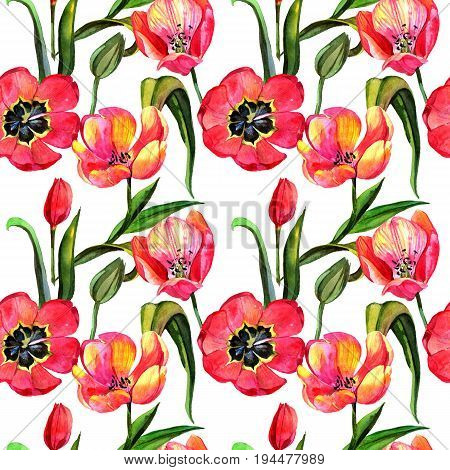 Wildflower tulip flower pattern in a watercolor style. Full name of the plant: tulip. Aquarelle wild flower for background, texture, wrapper pattern, frame or border.