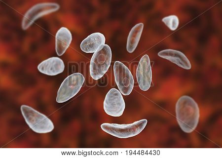 Parasitic protozoans Toxoplasma gondii which cause toxoplasmosis in tachyzoite stage, 3D illustration
