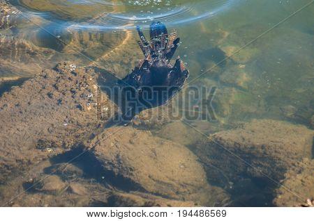 Cormorant foraging amongst the rocks along the South Australian coastline.