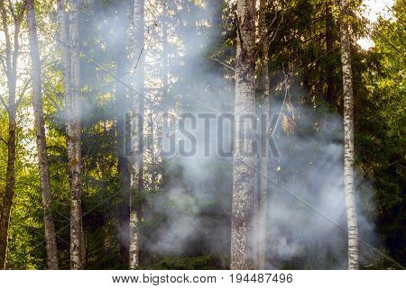 Thick Smoke In The Forest, Fire, Fire, Danger And Coziness