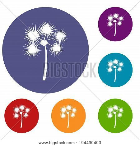 Spiny tropical palm tree icons set in flat circle reb, blue and green color for web