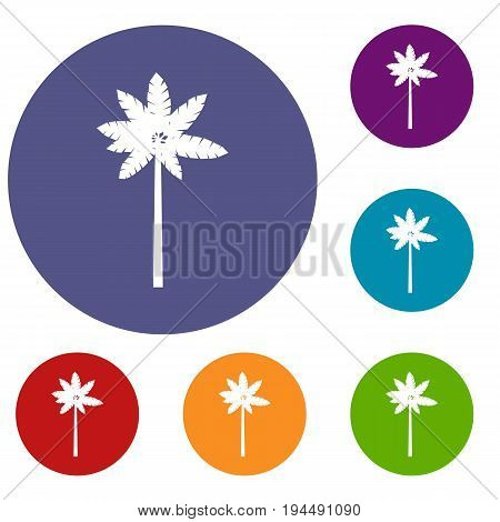 Palm woody plant icons set in flat circle reb, blue and green color for web