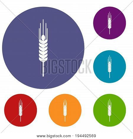 Stalk of ripe barley icons set in flat circle reb, blue and green color for web