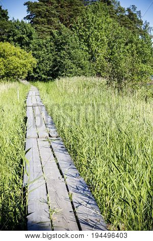 Wooden walkway through high green hay lead into forest
