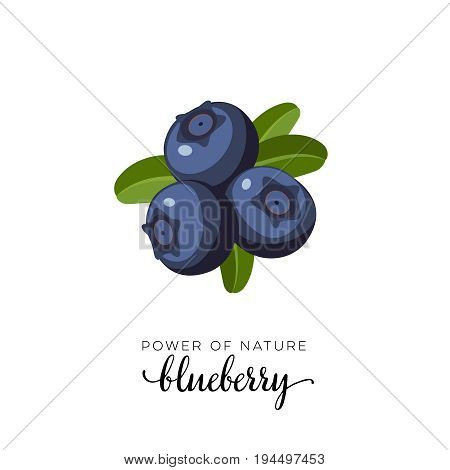 Blue blueberry berry flat icon with inscription colorful vector illustration of eco food isolated on white.