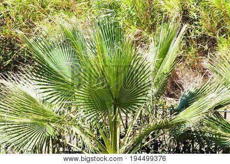 Decorative Palm Tree On Backyard In Giardini Naxos
