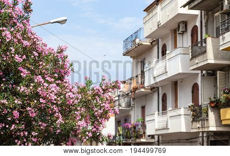 Oleander Tree And Houses In Giardini Naxos Town