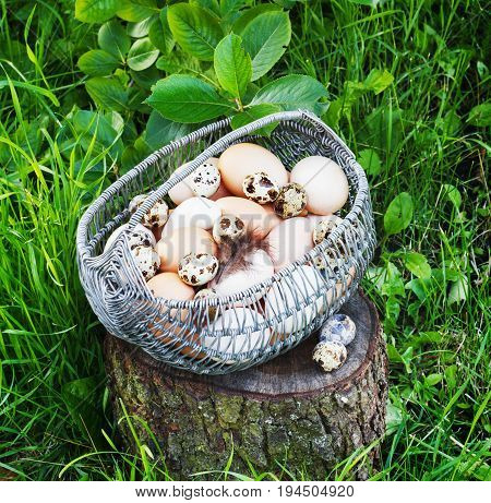 White and brown painted chicken eggs in a metal basket in a garden on a stump