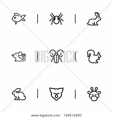 Set Of 9 Editable Zoology Icons. Includes Symbols Such As Turbot, Insect, Bun And More. Can Be Used For Web, Mobile, UI And Infographic Design.