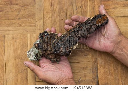 Сhaga , Medicinal Mushroom Growing On Birch.  Сhaga In Male Hands
