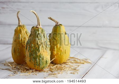 Green warty halloween pumpkins on white planks, holiday decoration