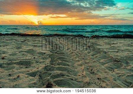 loggerhead sea turtle tracks in the sand created by turtle returning to the ocean after nesting and laying eggs on a Florida beach