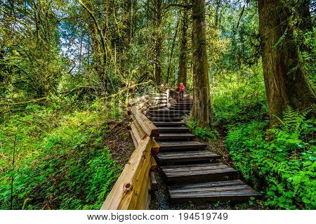 Woman hiking up a stairway through the temperate rain forest of Kanaka Creek Regional Park near the town of Maple Ridge in British Columbia, Canada