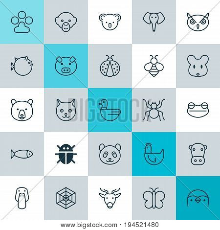 Zoology Icons Set. Collection Of Fish, Beetle, Marsupial And Other Elements. Also Includes Symbols Such As Moth, Butterfly, Web.