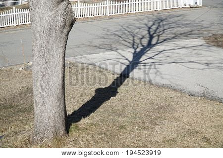 tree shadow on winter lawn and driveway in residential area