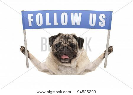 pug puppy dog holding up blue banner with text follow us for social media isolated on white background