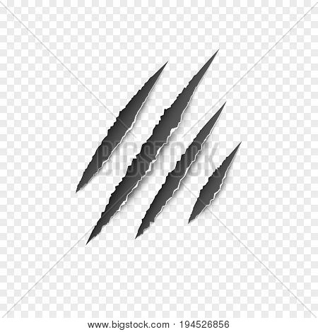 Claws paw scratches isolated vector on transparent background. Animal Claws horror scratch tiger, lion or bear .
