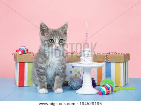 Fluffy gray and white kitten small birthday party miniature cake with one pink and white candle burning. Pastel birthday presents with brightly colored mice. Blue table with pink background.