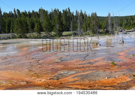 The Fountain Paint Pot is named for the reds, yellows and browns of the mud in this area. The differing colors are derived from oxidation states of the iron in the mud.
