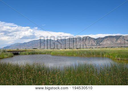Pond at the Bear River Migratory Bird Refuge, Utah.