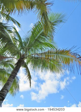 Palm tree fronds and a blue sky background