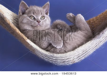 sleeping kitten in a hammock