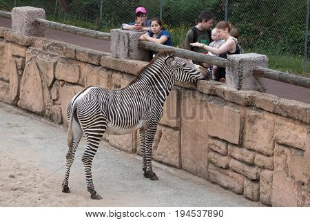 LES MATHES, FRANCE - JULY 4, 2016: Visitors looking at the Grevy's zebra (Equus grevyi), also known as the imperial zebra at La Palmyre Zoo (Zoo de La Palmyre) in Les Mathes, Charente-Maritime, France