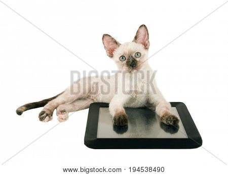 Cute tortie point Siamese kitten lying down with her paws on a tablet, looking up; isolated on white