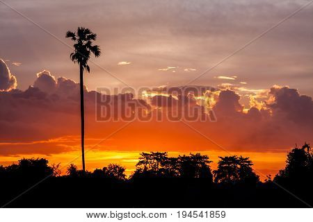 beautiful sunset with silhouette coconut and farm tree