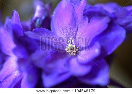 A close up image of a purple delphinium flower.