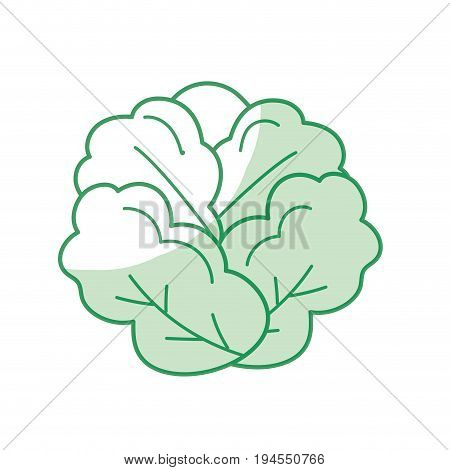 silhouette delicious and health lettuce vegetable vector illustration