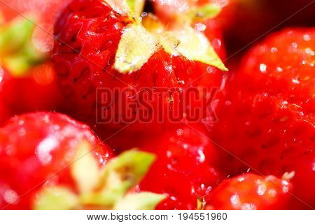 A background of ripe red strawberry harvest